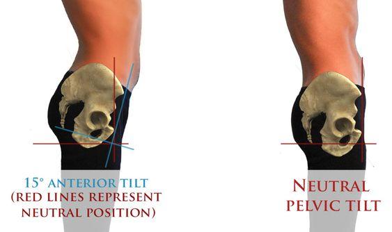 hip anatomy infogrpahic